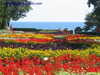 Amazing  Tulips show in Balchik sea resort