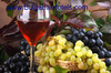 France Experts Introduce Wine Tours in Bulgaria
