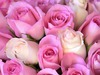 Rose oil production is one of Bulgaria�s most successful tourist attractions that draw tourists