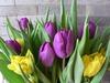Tulips Parade in Balchik beach resort